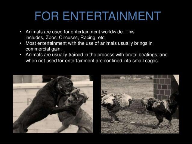 Circus animal abuse facts