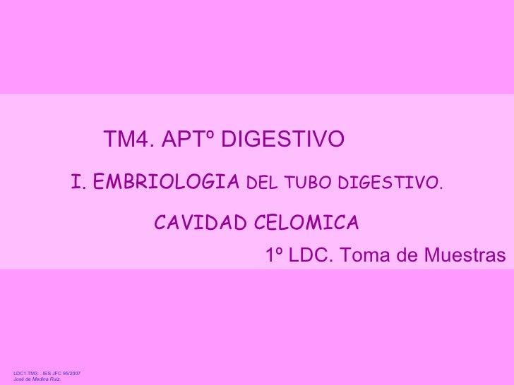 jmr_tm4_digestivo_embriologia_celoma_07