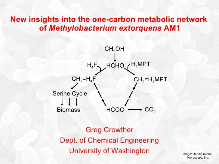 New insights into the metabolic network of Methylobacterium extorquens AM1