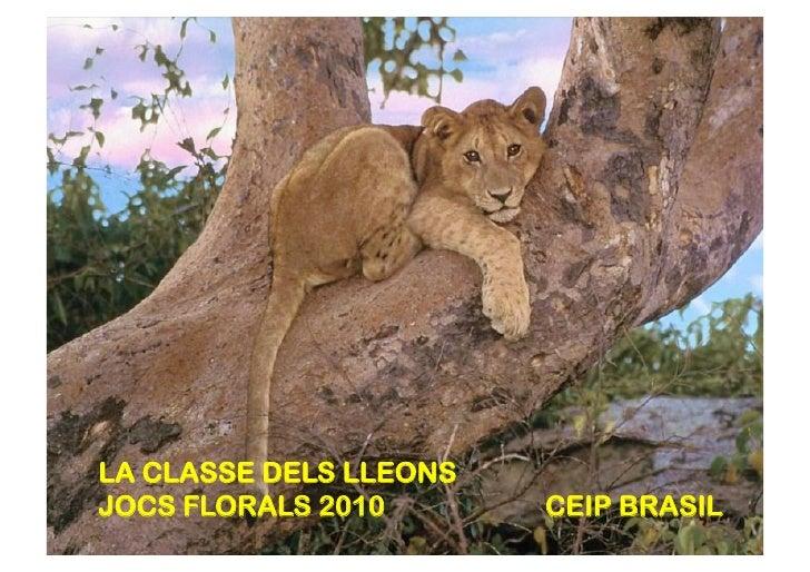 LA CLASSE DELS LLEONS JOCS FLORALS 2010       CEIP BRASIL