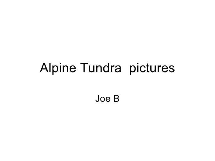 Alpine Tundra  pictures Joe B