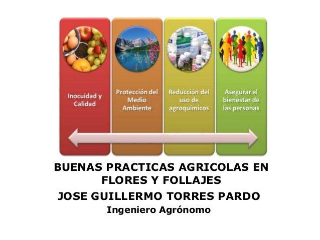 JOGUITOPAR / BUENAS PRACTICAS AGRICOLAS EN FLORES Y FOLLAJES