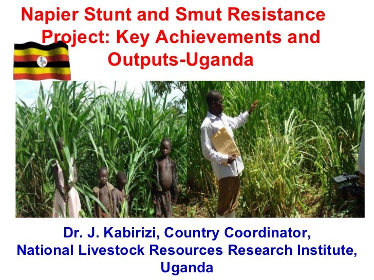 Napier Stunt and Smut Resistance Project:  Key Achievements and Outputs- Uganda Presented at the ASARECA/ILRI Workshop on ...
