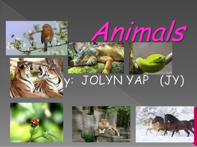 Animals are divided into groups; mammals,birds, fish, reptiles, insects and anphibian. Iwill only be introducing animals i...