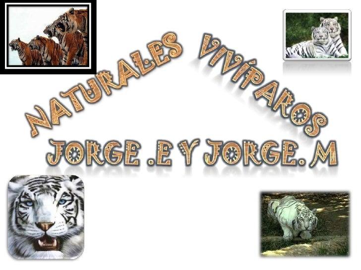 CLASIFICACION DE LOS                                  ANIMALES               VERTEBRADOS                          INVERTEB...