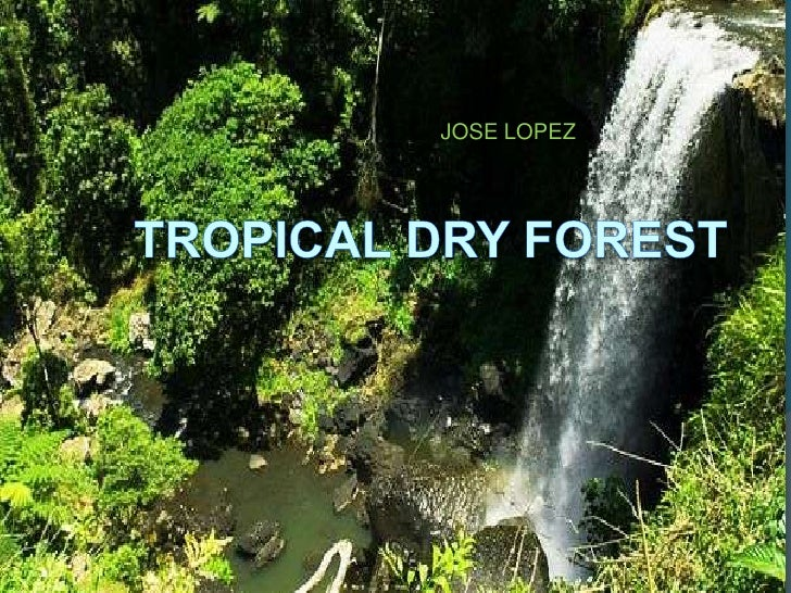 JOSE LOPEZ<br />Tropical Dry forest<br />