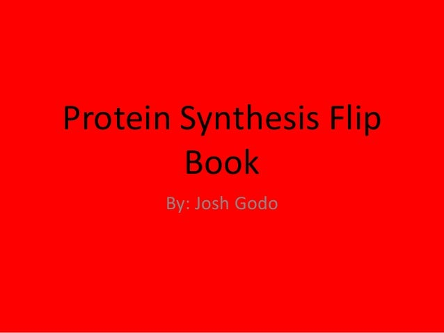 Protein Synthesis Flip Book By: Josh Godo