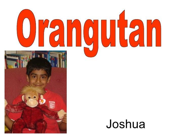 Orangutan Joshua