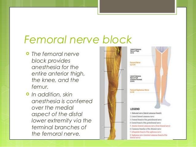 nerve block cpt | masteri, Muscles