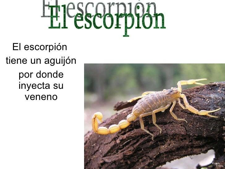 J Pablo Presentacopion