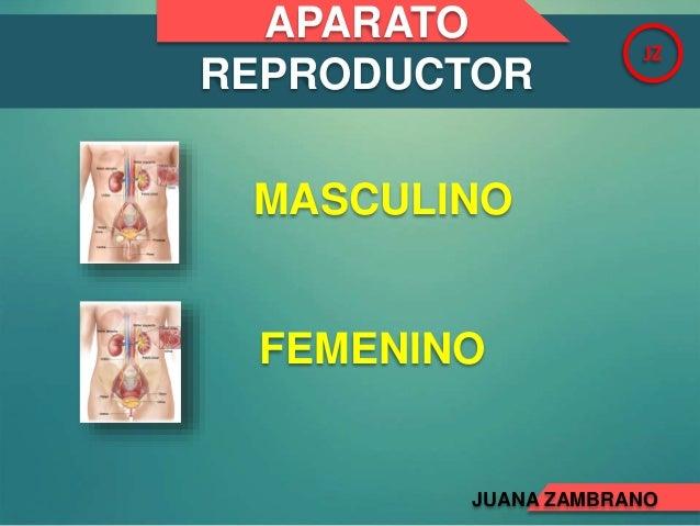 APARATO REPRODUCTOR JZ MASCULINO FEMENINO JUANA ZAMBRANO