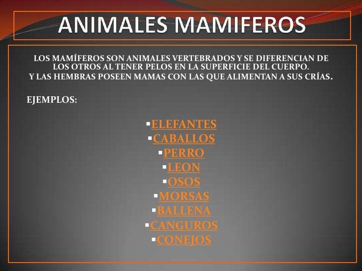LOS MAMÍFEROS SON ANIMALES VERTEBRADOS Y SE DIFERENCIAN DE       LOS OTROS AL TENER PELOS EN LA SUPERFICIE DEL CUERPO. Y L...