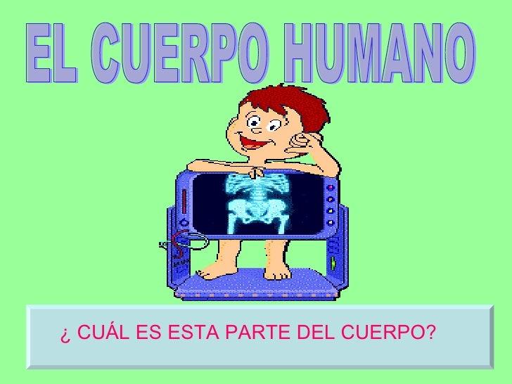 EL CUERPO HUMANO ¿ CUÁL ES ESTA PARTE DEL CUERPO?