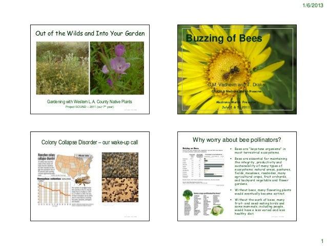 Bee Garden - Notes