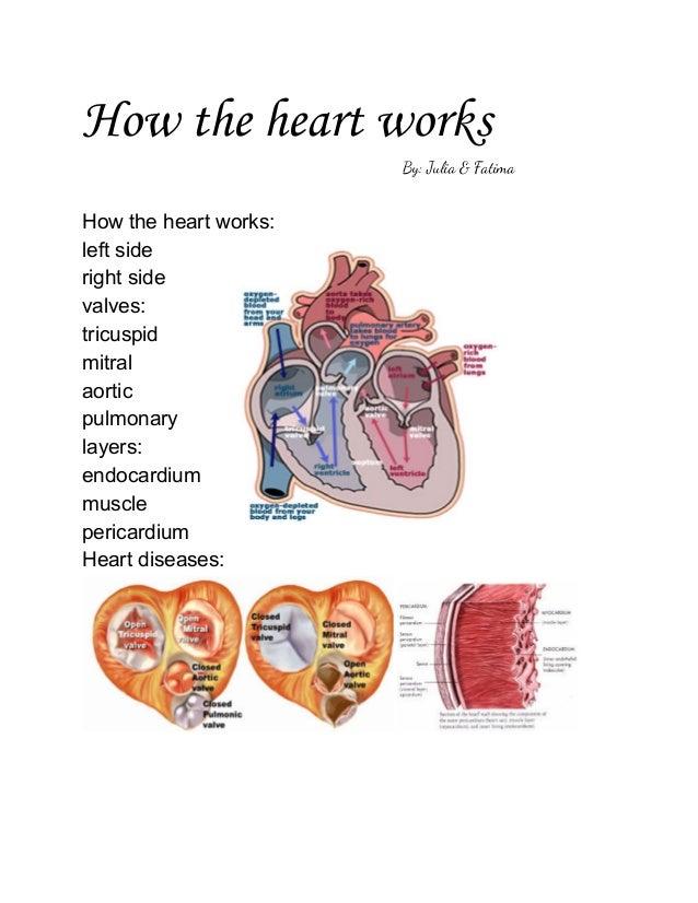 How the heart works By: Julia & Fatima  Howthehea...