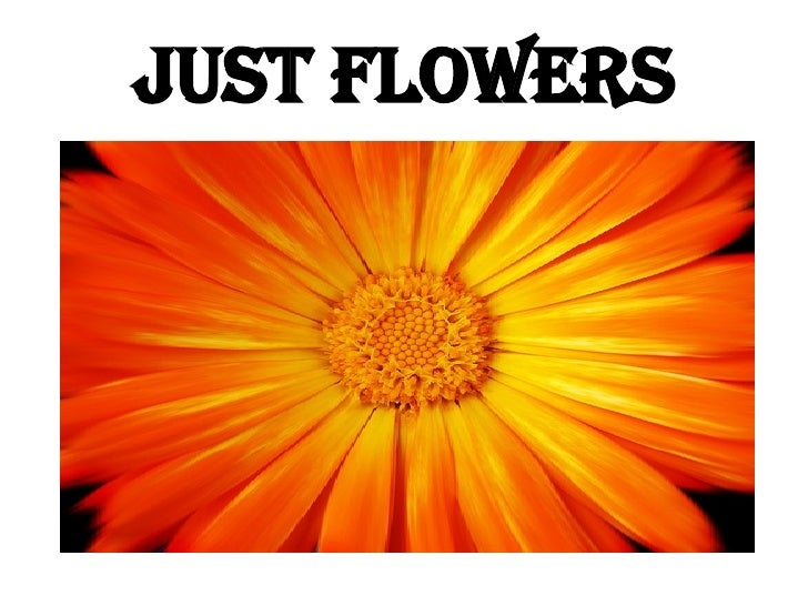 JUST FLOWERS