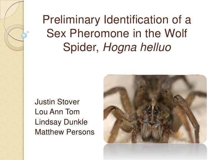 Preliminary Identification of a  Sex Pheromone in the Wolf     Spider, Hogna helluoJustin StoverLou Ann TomLindsay DunkleM...