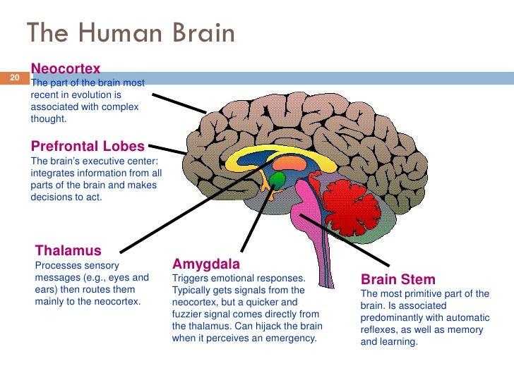 Prefrontal lobe functions