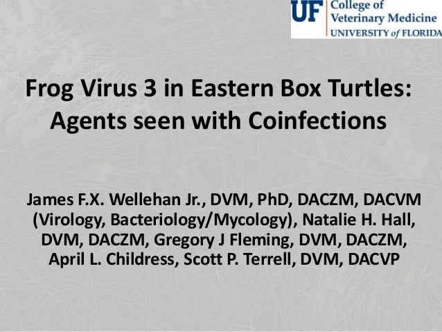 Frog virus 3 in eastern box turtles: agents seen with coinfections