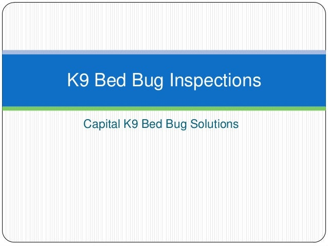 Capital K9 Bed Bug Solutions K9 Bed Bug Inspections