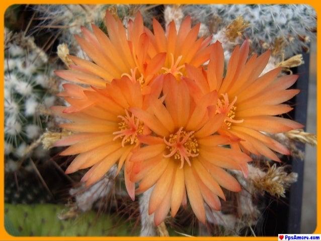 Visita il nostro sito:  www.PpsAmore.com  Tante presentazioni sull'amore, l'amicizia, la poesia, paesaggi, belle fr...