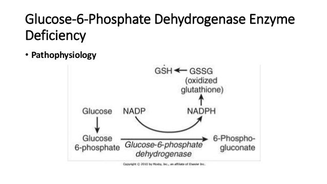 phosphate dehydrogenase deficiency disease essay Glucose-6-phosphate dehydrogenase deficiency a side effect of this disease is that it confers protection against malaria, in.