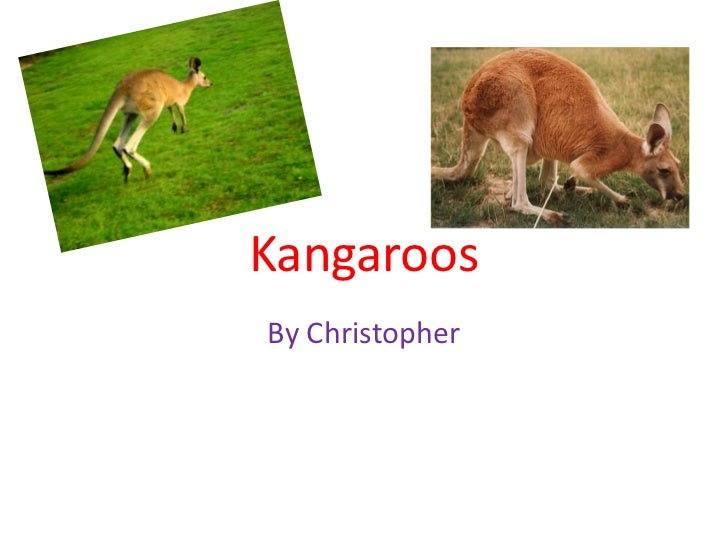 Kangaroos<br />By Christopher<br />