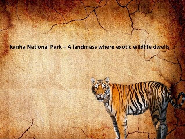 Kanha National Park – A landmass where exotic wildlife dwells