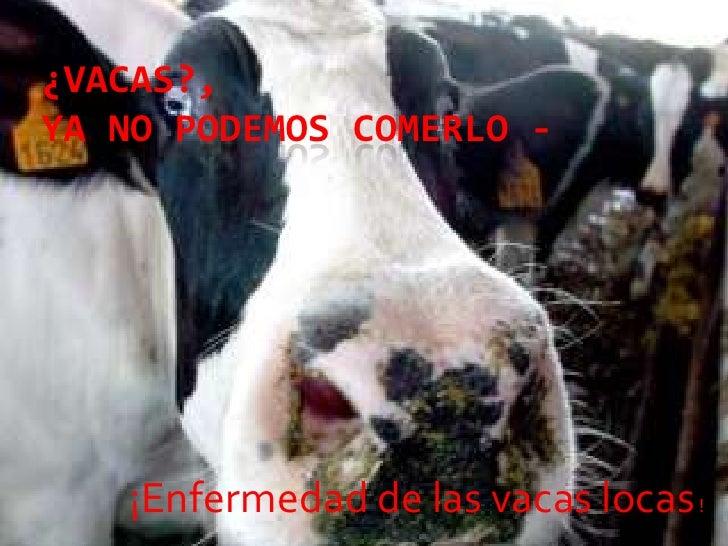 ¿Vacas?, ya no podemos comerlo -<br />¡Enfermedad de las vacas locas !<br />