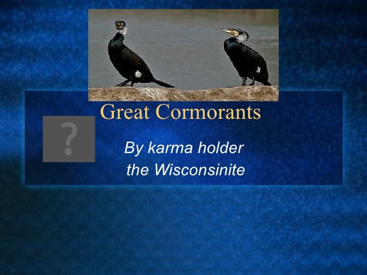 Great Cormorants  By karma holder  the Wisconsinite