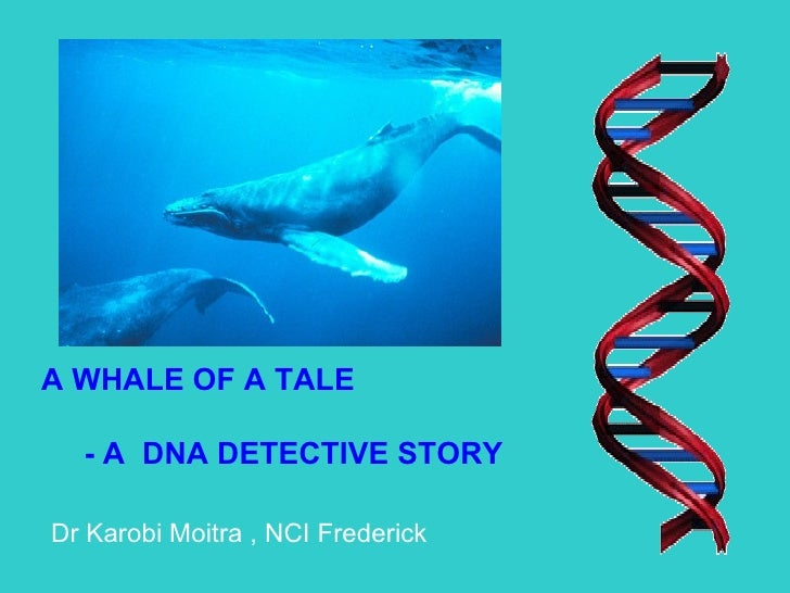 A WHALE OF A TALE - A  DNA DETECTIVE STORY Dr Karobi Moitra , NCI Frederick