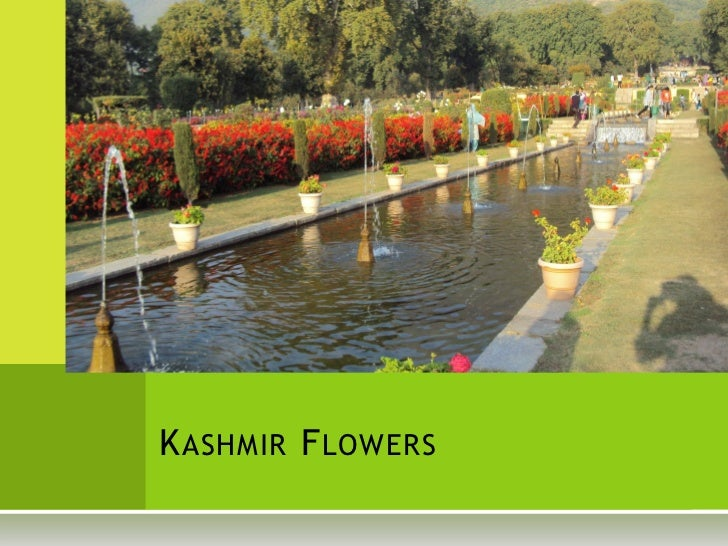 Kashmir Flower Photographs - Oct 2011 #maproute