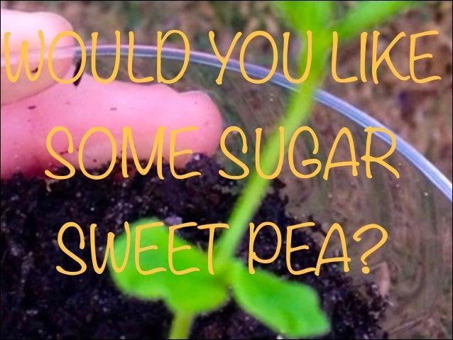 WOULD YOU LIKE SOME SUGAR SWEET PEA?
