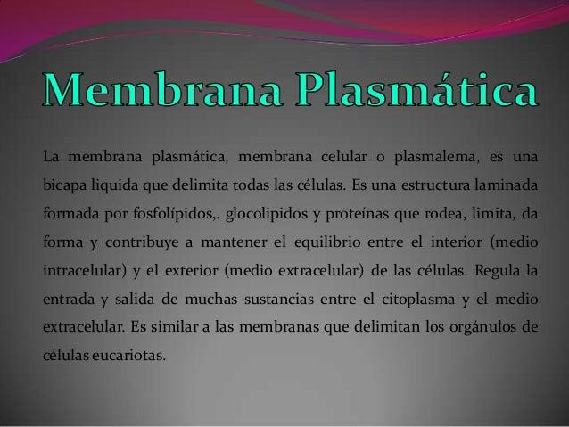 La membrana plasmática, membrana celular o plasmalema, es una bicapa liquida que delimita todas las células. Es una estruc...