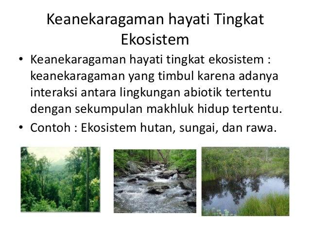 ekosistem keanekaragaman hayati tingkat ekosistem keanekaragaman yang