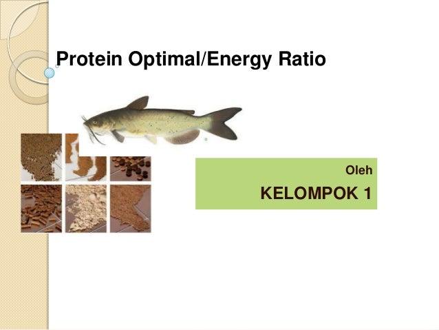 Protein Optimal/Energy Ratio  Oleh  KELOMPOK 1