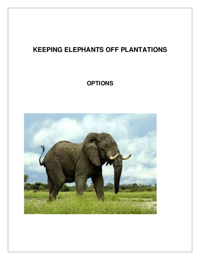 Keeping Elephants  away from plantations