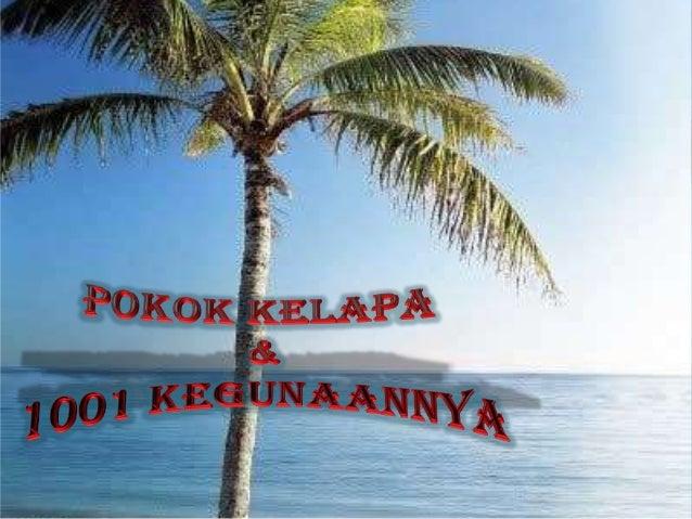    Pokok kelapa mampu menghasilkan sehingga 75 biji    kelapa setahun dengan itu, ia mempunyai nilai    ekonomi yang ting...