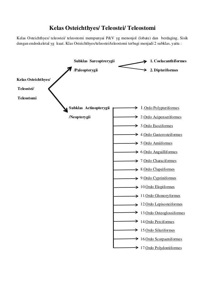 Kelas Osteichthyes/ Teleostei/ TeleostomiKelas Osteichthyes/ teleostei/ teleostomi mempunyai P&V yg menonjol (lobate) dan ...