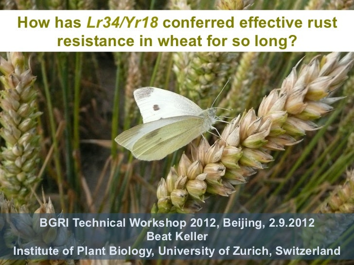 How has Lr34/Yr18 conferred effective rust    resistance in wheat for so long?      BGRI Technical Workshop 2012, Beijing,...
