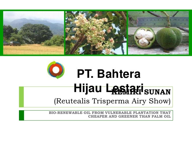 PT. BahteraHijau Lestari <br />KEMIRI SUNAN(ReutealisTrisperma Airy Show)<br />BIO-RENEWABLE OIL FROM VULNERABLE PLANTATIO...