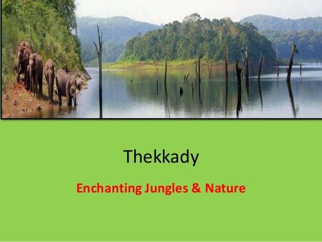 Thekkady Enchanting Jungles & Nature