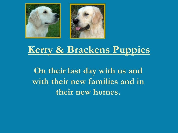 Kerry & Brackens Puppies On their last day with us and with their new families and in their new homes.