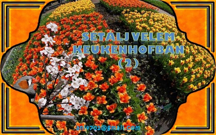 Keukenhof virágai(2)+ani (nx power lite)