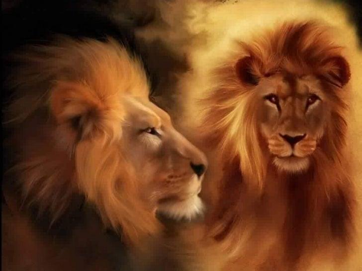 Belleza salvaje Kevin Richardson El amigo de los leones