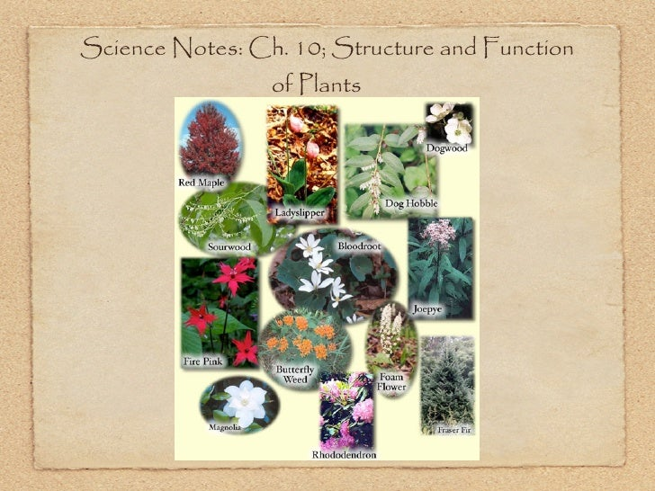 Science Notes: Ch. 10; Structure and Function                 of Plants