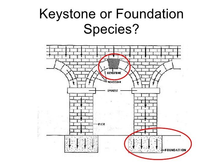 Keystone or Foundation Species?