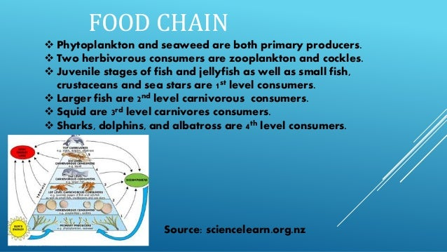 The gallery for --> Ocean Ecosystem Producers Consumers ...