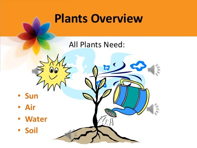 Parts of a plant - Plants that need no sunlight ...
