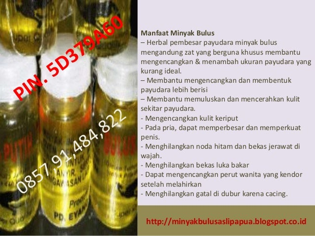 khsiat minyak bulus putih khsiat minyak bulus putih untuk